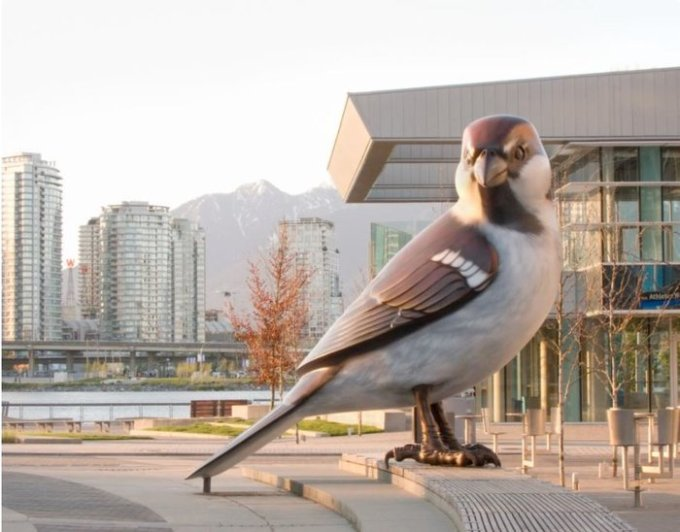 rsz_birdss