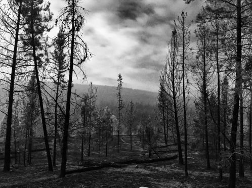 Forest-Fire-BW
